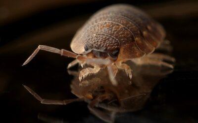 Qui doit intervenir lors de présence de parasites ou de nuisibles dans un logement ?